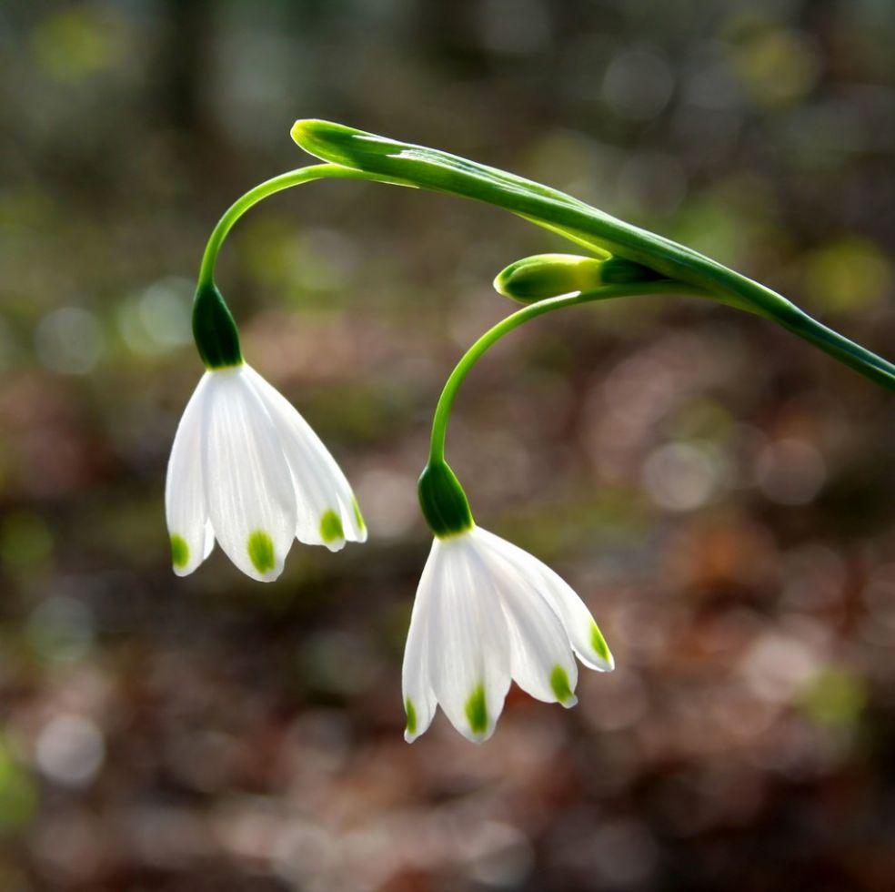 Весна в Англии