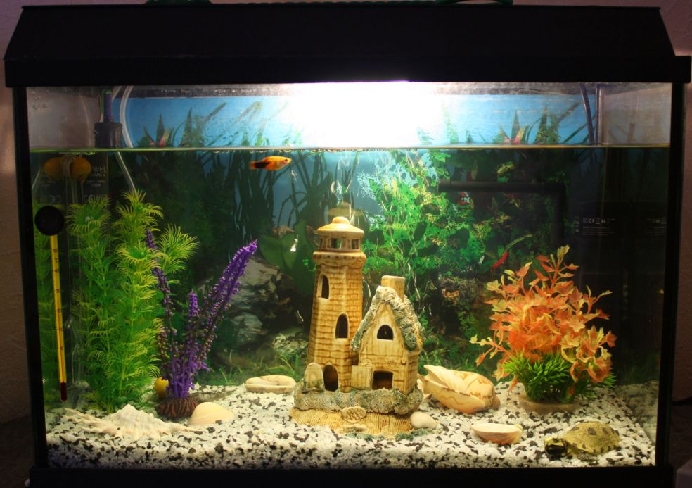 Домашние аквариумы фото 5