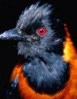 Ядовитые птицы