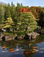 Карпы кои – самые популярные рыбки для садовых водоемов