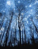 Будущей ночью на Землю прольется «звездный» дождь