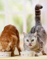 Как подобрать правильно корм для кошки?